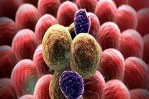 Daniel 12:4..Y la ciencia se aumentará..Israelíes descubren proteínas que destruyen el cáncer