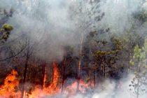 Incendio forestal afecta comunidad de Constanza R.D.