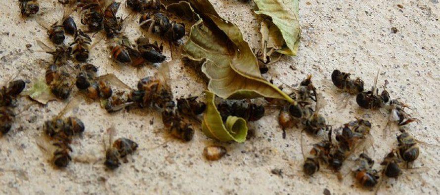 La muerte masiva de abejas presagian una hambruna mundial