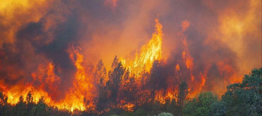 El Amazonas se encuentra en peligro tras informarse de nuevos incendios a gran escala