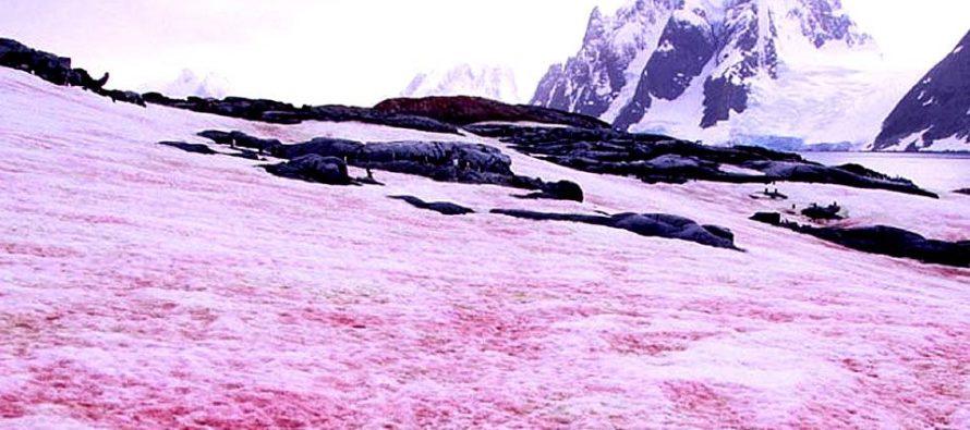 Aparece nieve rosa en los Alpes y no es una buena noticia